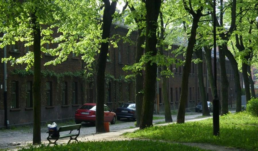 Prof. Dmuchowski: Nie ma dobrego miasta bez zieleni