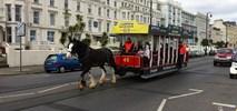 Konie ciągnące tramwaj na wyspie Man zamęczane?