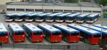 Puławy z autobusami mini od Solarisa?
