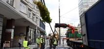 Poznań. Na ulicy Święty Marcin pojawiły się drzewa