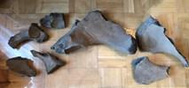Metro na Wolę: Szczątki prehistorycznego zwierzęcia sprzed 100 tys. lat