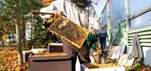 Metro ma swoje pszczoły