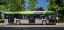 Satu Mare. Solaris dostarczy kolejne autobusy do Rumunii
