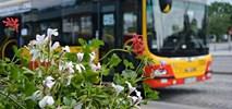 Kwiaty na warszawskich pętlach autobusowych i tramwajowych