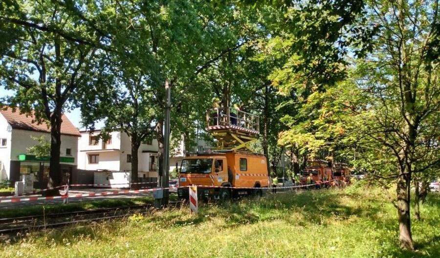 Wrocław: Zabytkowe dęby opóźnią remont torowiska na Biskupin