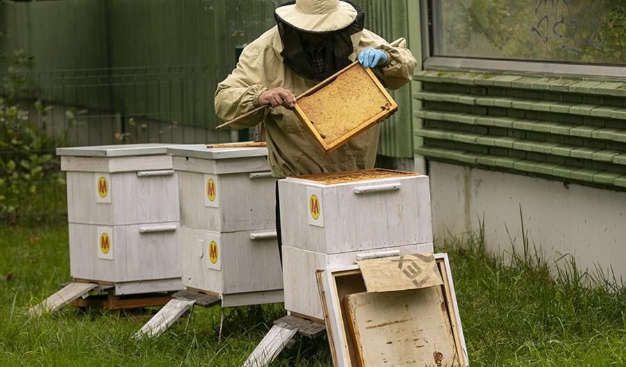 Metrowskie pszczoły szykują się do zimy