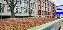 Poznań: Wiaty przystankowe przyjazne ptakom