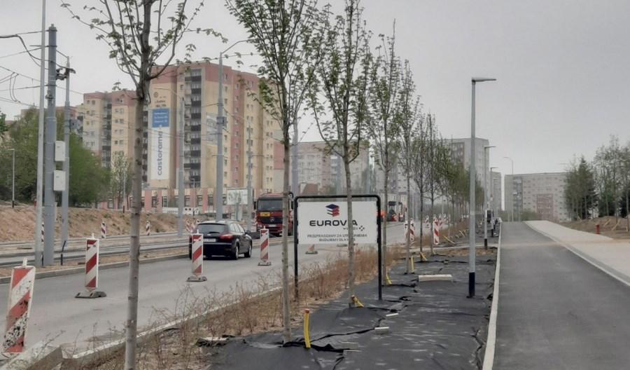 Szczecin: Zieleni się Szafera. Kolejne środki na drzewa