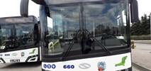 Toruń z dwiema ofertami na zakup autobusów