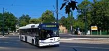 MZK Toruń z jedną ofertą na autobusy