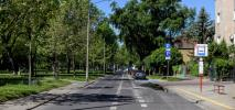 Warszawa zazieleni ulice. 18 tys. drzew miejskich i kolejne... z aplikacji