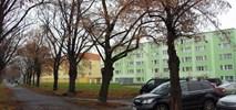 Gdańsk porządkuje parkowanie. Więcej stref, elektryki za darmo