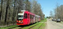 Gdańsk. Coraz więcej pasażerów komunikacji miejskiej