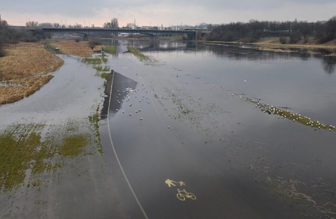 Poznań. Dlaczego po rowerowej Wartostradzie pływa ptactwo wodne