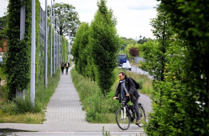 Toruń: Średnicówka się zieleni