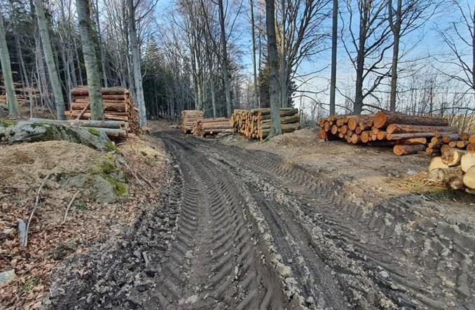Jelenia Góra: Rowerowe single tracki zrujnowane przez leśników w czasie wycinek