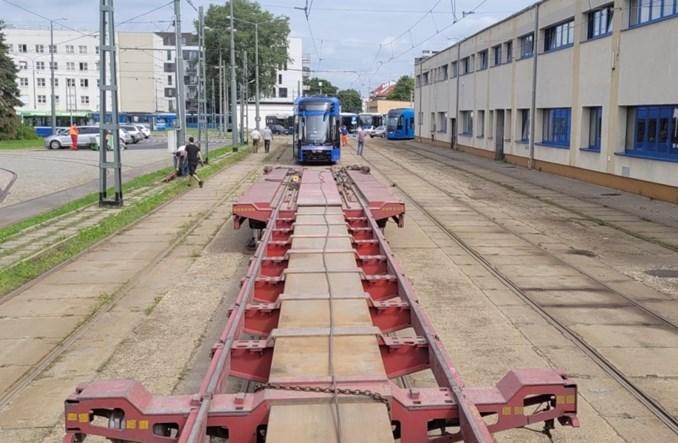W Krakowie już komplet 50 Lajkoników