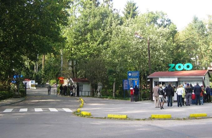 Tramwajem do zoo. Oliwa nowym salonem Gdańska?
