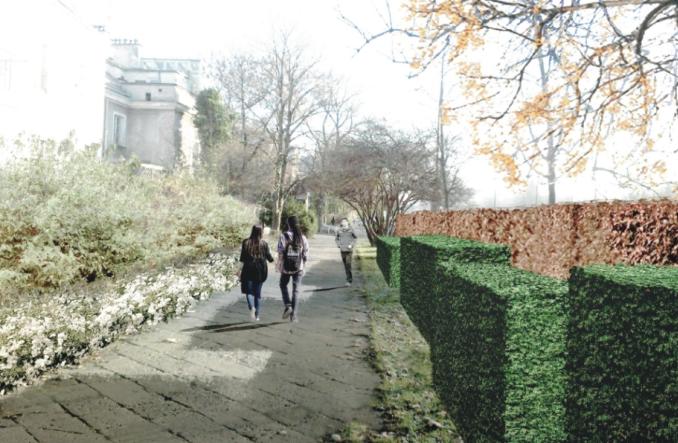 Warszawa: Zielona ściana żywopłotów na Wawelskiej jeszcze w tym roku. Rusza przetarg