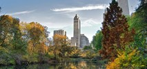 Treepedia, czyli jak zielone jest twoje miasto?