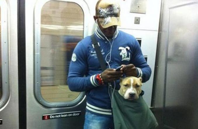 Nowy Jork. Dlaczego pasażerowie metra wożą pitbulle w torbach?