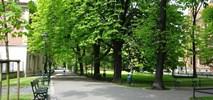 Kraków chce walczyć zielenią z nielegalnym parkowaniem
