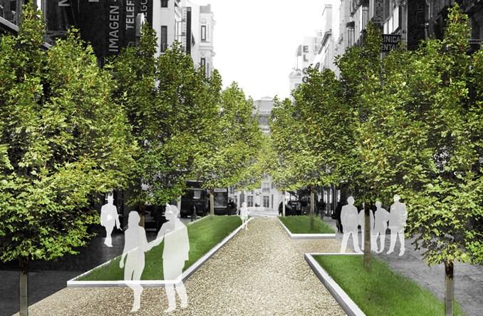 Czy drzewa mogą obniżyć temperaturę w miastach?